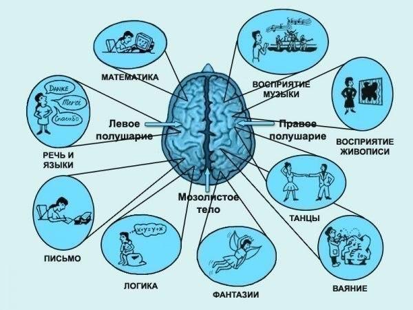 Развиваем полушария мозга правильно