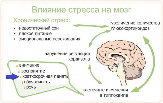 Влияние стресса на мозг и память человека