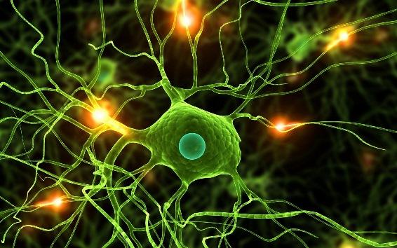 Прохождение сигнала по нервной клетке