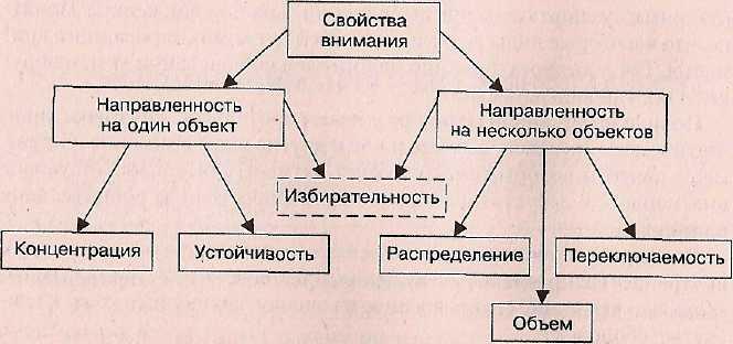 6 свойств внимания